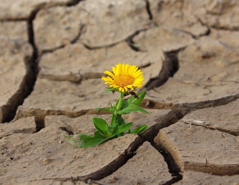 Blume, Wüste